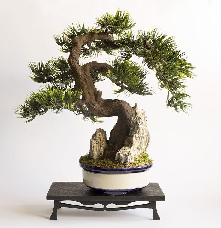 17 best images about bonsai on pinterest style bonsai. Black Bedroom Furniture Sets. Home Design Ideas