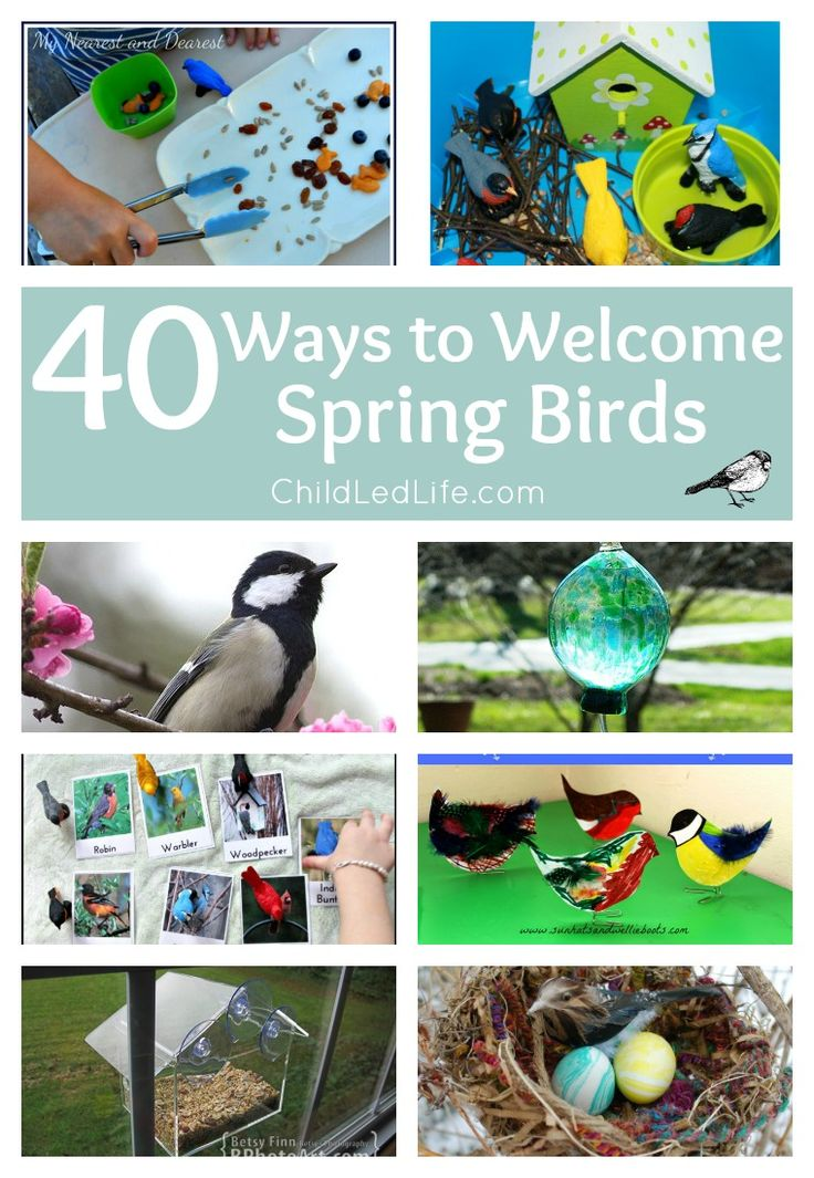 40 Ways to Welcome Spring Birds! DIY bird feeders, crafts, bird learning, free printables, and so much more on ChildLedLife.com