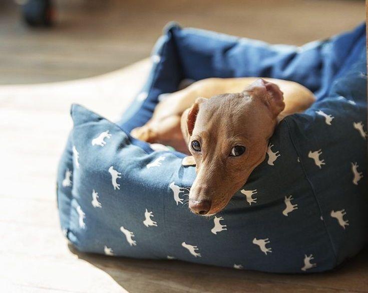 COMO DEJAR AL PERRO SOLO EN CASA SIN QUE LLORE Pautas y trucos . Cool Beds, Good Sleep, Dog Bed, Pet Care, Cosy, Your Dog, Calgary, Top Rated, Bliss