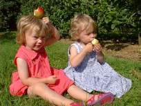 Apples in the sunshine!