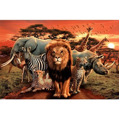 64 best images about africa on pinterest jungle animals acrylics and we don t. Black Bedroom Furniture Sets. Home Design Ideas