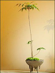 Bonsai. It's the planter that I love.