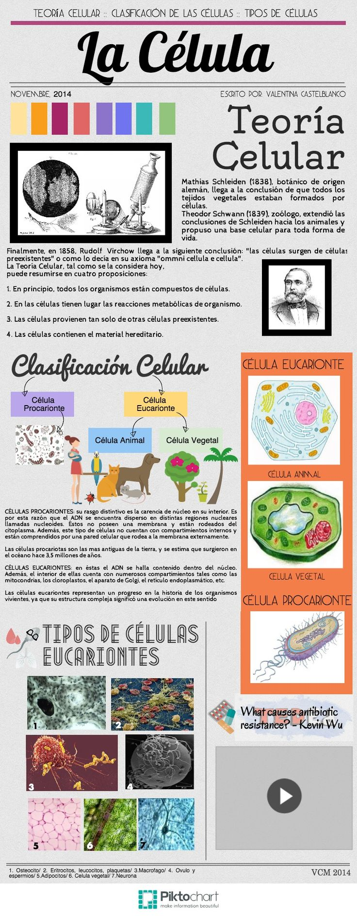 La Célula | @Piktochart Infographic Valentina Castelblanco