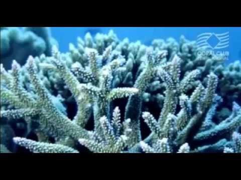 Корал Майн  Коралловая вода