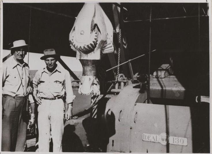 816B/TB/1267: Drilling platform, Rough Range, 1954 http://encore.slwa.wa.gov.au/iii/encore/record/C__Rb1958315?lang=eng