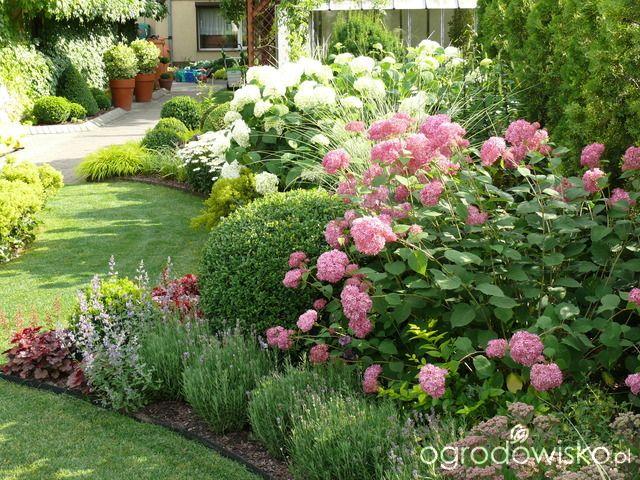 Pink Anabelle Ogród mały, ale pojemny;) - strona 85 - Forum ogrodnicze - Ogrodowisko