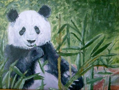Panda Bear. Paintings in oil