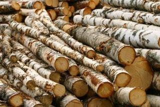 How to Preserve Birch Tree Branches | eHow