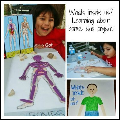 Taking a Look Inside Our Bodies. A Kids early learning activity that they can even make into a book. Learning about Bones and Organs using puzzles & play dough