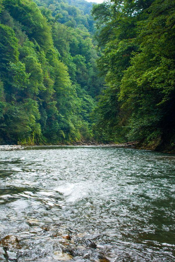 Forest River - Sochi, Russia
