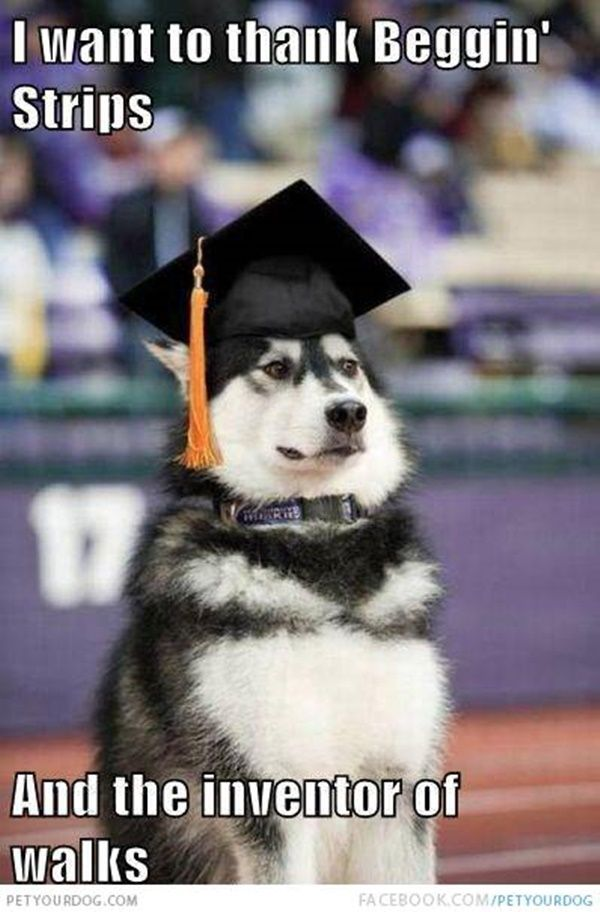 40-pictures-of-cute-and-funny-husky-faces-24