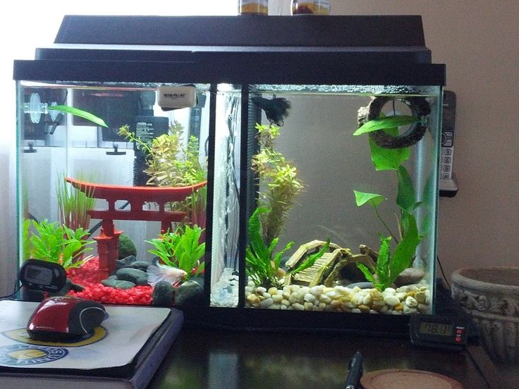 8 best images about betta on pinterest swim japanese for Split fish tank