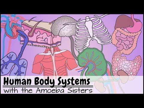 17 Best Ideas About Human Body Systems On Pinterest