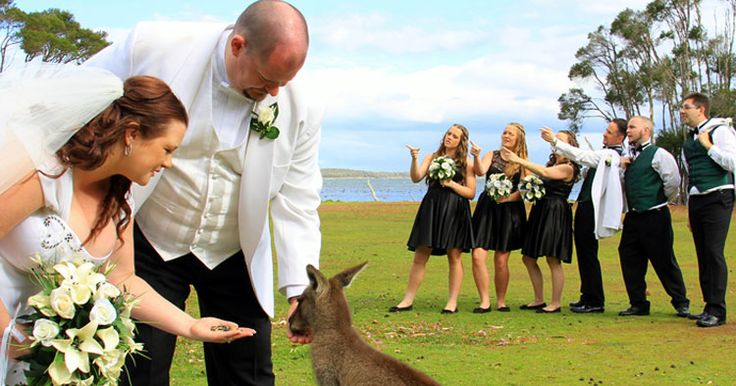 If your #heart desires a bush #wedding with #wildlife on your #guestlist, Waterfront Retreat At Wattle Point offers a unique opportunity to get close to native #animals. Nothing beats a stunning #lake view to add serenity to your wedding day.