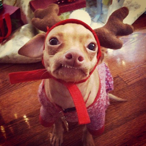 Hahaha funny dog