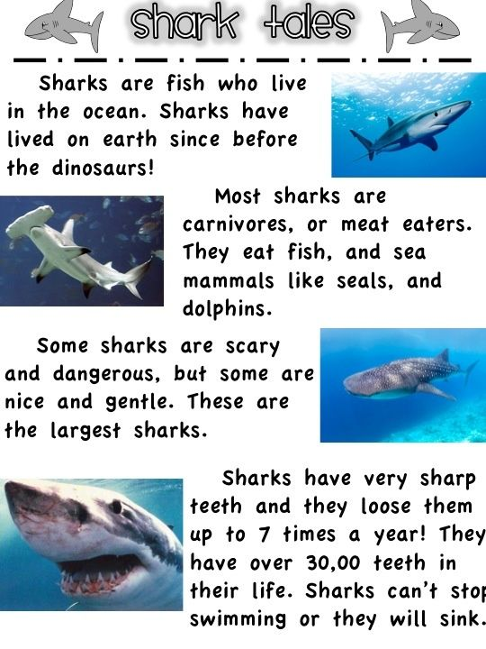 First Grade Fanatics: Whales and Sharks printables for mini unit                                                                                                                                                                                 More