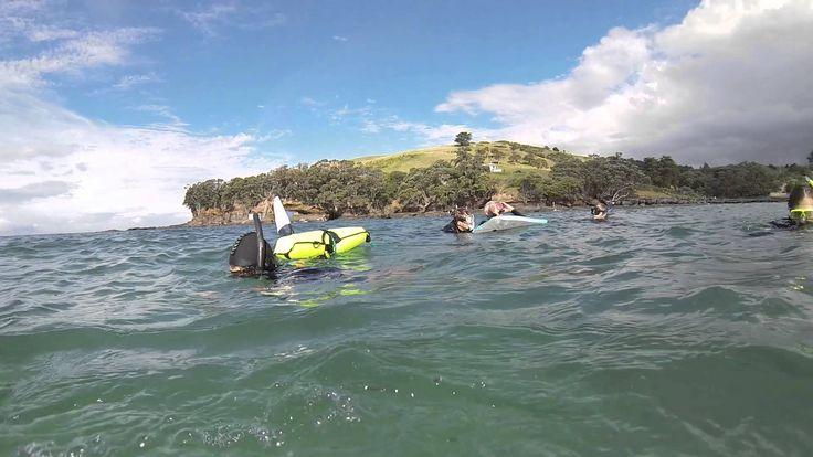 Dive into Adventure - Goat Island
