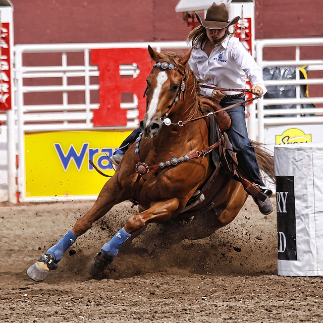 23 Best Images About Calgary Stampede Memories On