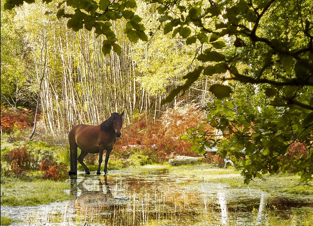 The New Forest in autumn - ponies and golden trees, what more could you want?