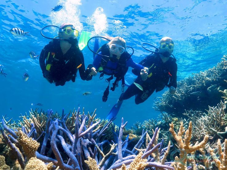 Scuba Diving in Goa Memorable To Experience  >>> Scuba diving is one of the memorable things to experience in #Goa. Welcome to the different world of underwater and run your eyes over an attractive corals, vibrant fishes, Shells, shipwrecks and exotic creatures. 365hops offers an opportunity to experience scuba diving in affordable price  with PADI certified professionals.  #ScubaDiving