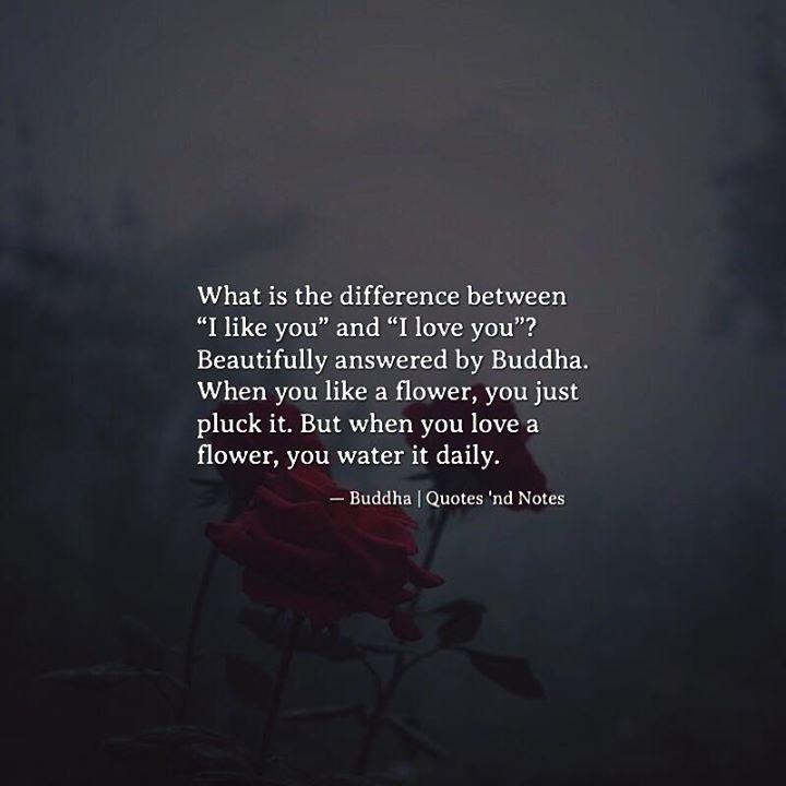 """What is the difference between """"I like you"""" and """"I love you""""? Beautifully answered by Buddha. When you like a flower, you just pluck it. But when you love a flower, you water it daily. — Buddha —via..."""