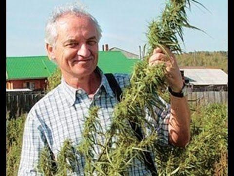 """Progress and new trends in cannabis treatment"", by Doc. RNDr. Lumír Ondřej Hanuš, DrSc., Dr.h.c.mult. at Cannafest 2015. The presentation is in original lan..."
