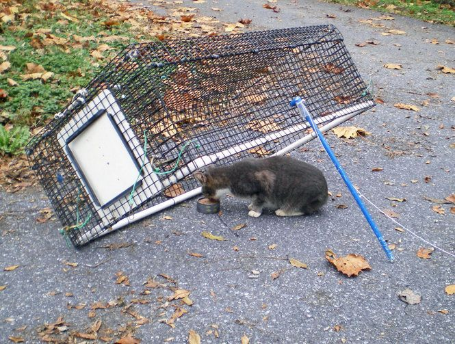 Q. We have several outdoor male strays who like to use our patio door/screen and