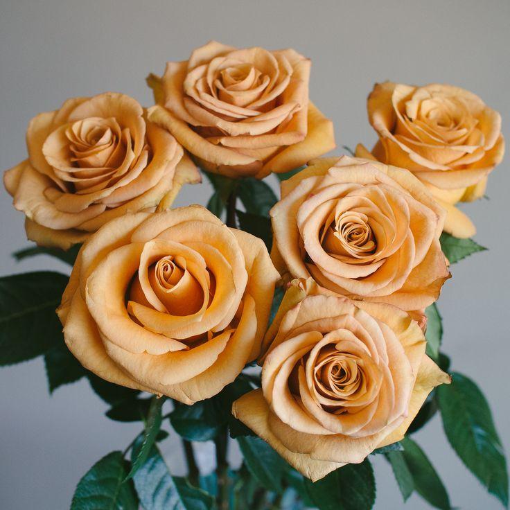 Roses In Garden: Rose Varietes Images On Pinterest