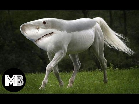 20 Weird Animals You Didn't Know Exist ✔