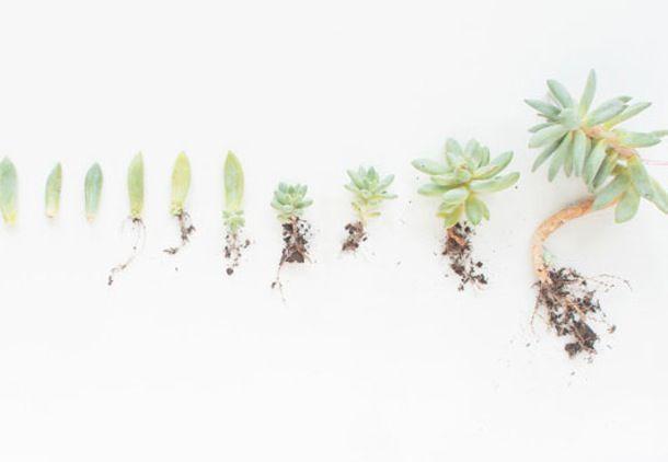 Sukkulenter er nogle af de mest taknemmelige planter på jorden, og så er de smukke! Vi viser, hvordan du selv kan drive dem frem.