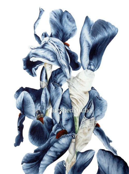Black Iris Flower Watercolour Large botanical por BlueShedStudio