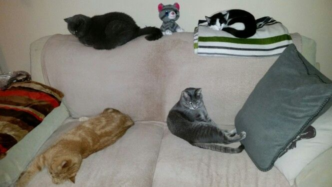 Meine 4 Katzen auf einen Streich