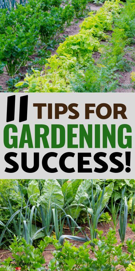 Gärtnern für Anfänger: 11 Tipps für einen erfolgreichen Start