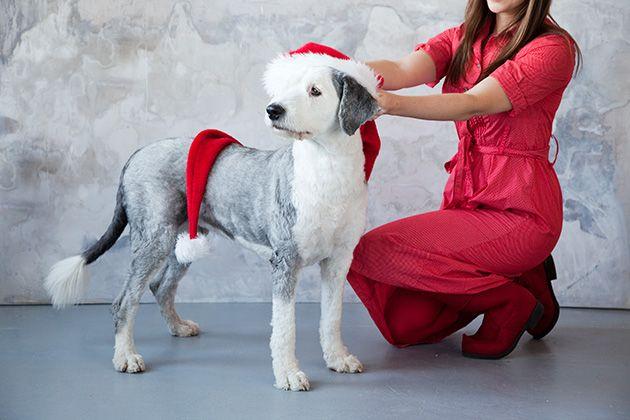 Omannäköinen kuva lemmikistä joulukortissa muistetaan varmasti! http://www.ifolor.fi/inspire_10_joulukortti_ideaa_joulu_aikuisten_kesken