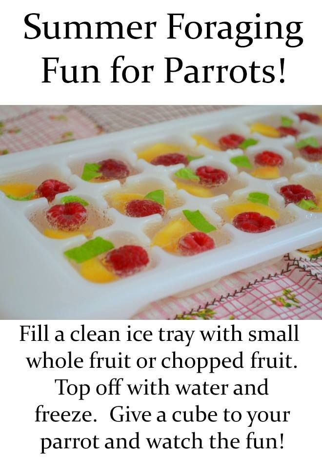 Summer Foraging Fun For Parrots.