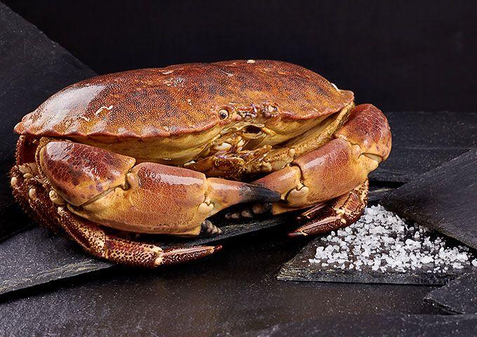 Cómo cocinar el buey de mar correctamente
