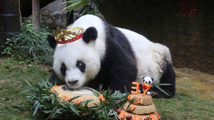 World's oldest panda in captivity dies in China | Fox News