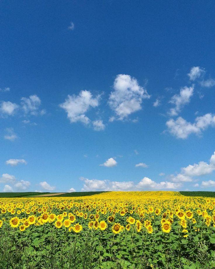 """28 aprecieri, 1 comentarii - Alexandra Bogdan (@ale.bogdan) pe Instagram: """"#sunflower #sunflowerfield #sobeautiful"""""""