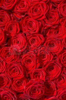 Strauß roter Rosen; dicht an dicht; Special Moments; Verliebt; Blumenhandel