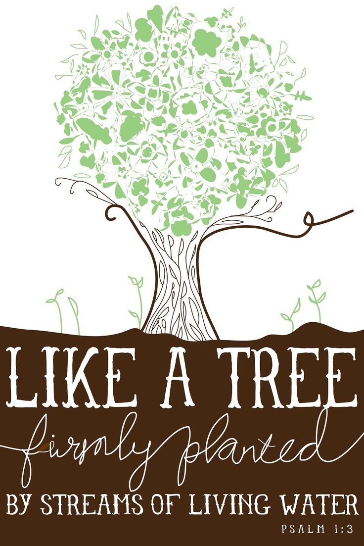 When you delight in the Word, and meditate on it day and night, THEN... you will be like a tree firmly planted... (Psalm 1:2-3)