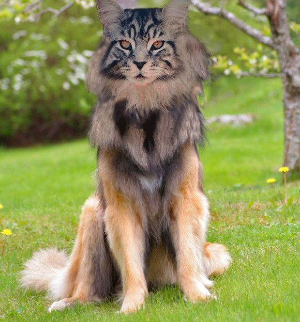 cat dog anyone hybrid animal weird hybrid animals