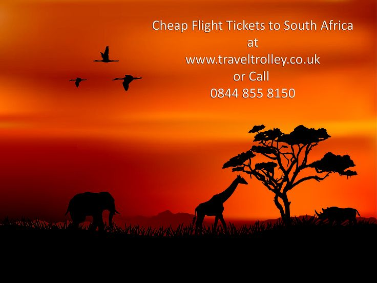 African Tree Silhouette.Cheap Flight to South Africa.