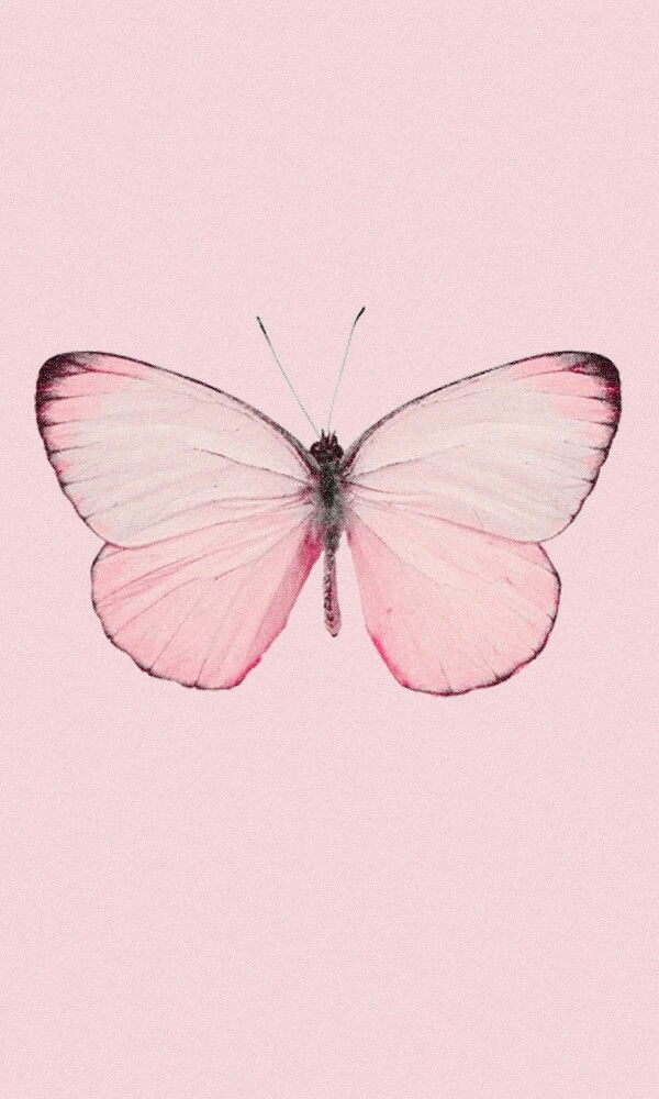 Google Image Result For Https I Pinimg Com Originals Be E8 97 Bee897ed43c150df75eeb In 2020 Butterfly Wallpaper Iphone Butterfly Wallpaper Pink Wallpaper Backgrounds