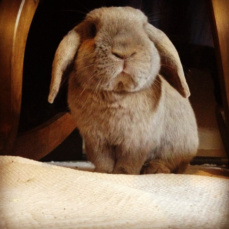 My lovely bunny, Toppo. I love him <3 :) [photo taken by Aino Renko]