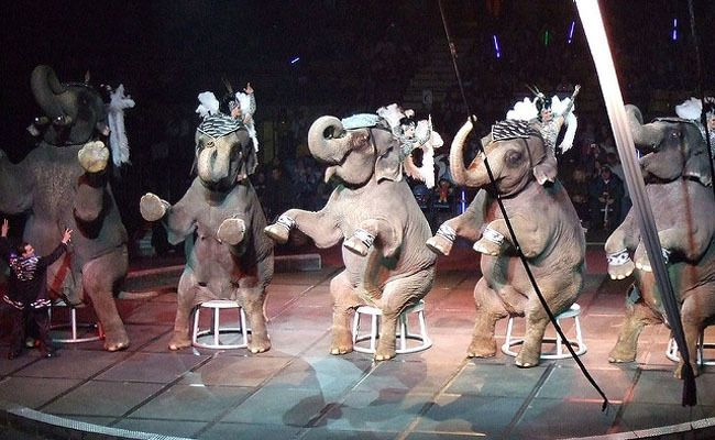 Good News! New York Just Banned Circus Elephants | Care2 Causes