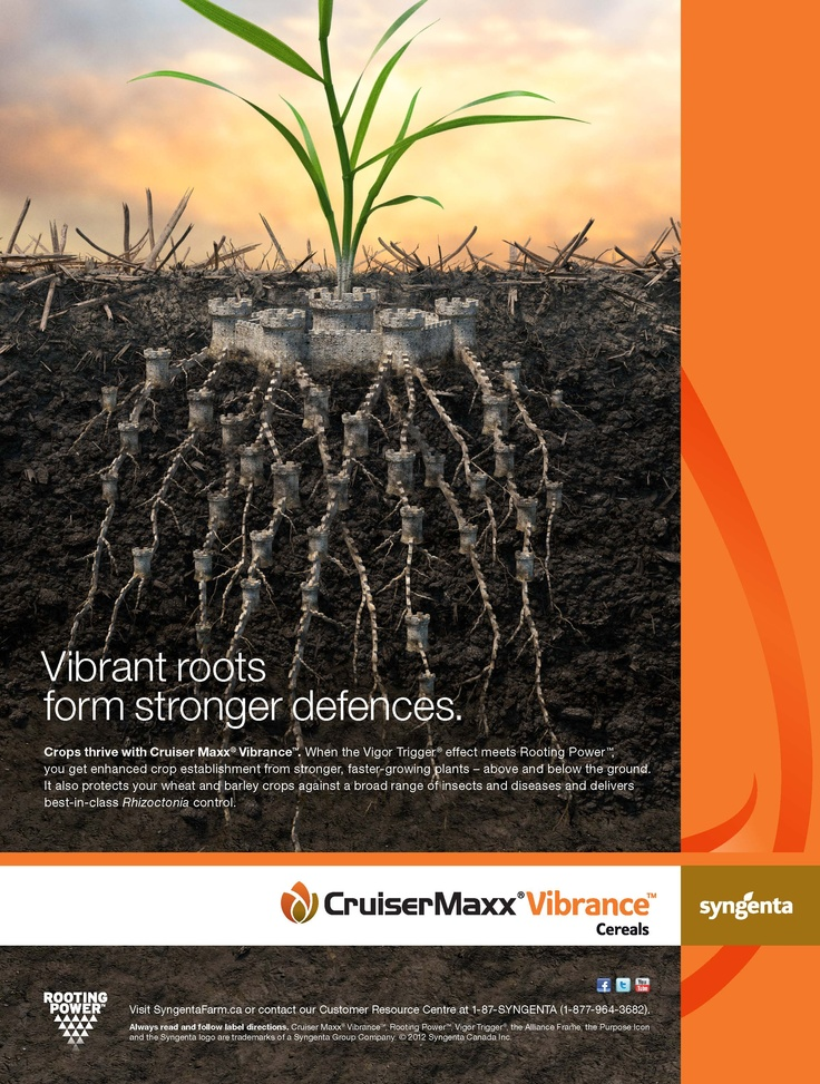 Cruiser Maxx Vibrance Cereals - Vibrant roots form stronger defences. http://www.syngentafarm.ca