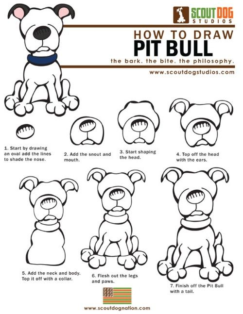 how to draw a pitbull step by step for beginners - Google Search