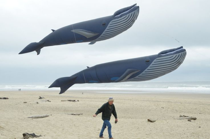 "Flying Whales at the Lincoln City OR Kite Festival | oregonlive: ""We have these wonderful beaches and these wonderful winds,'' David Gomberg says. ""It's the ideal thing to do here..."" #Kites #Oregon"