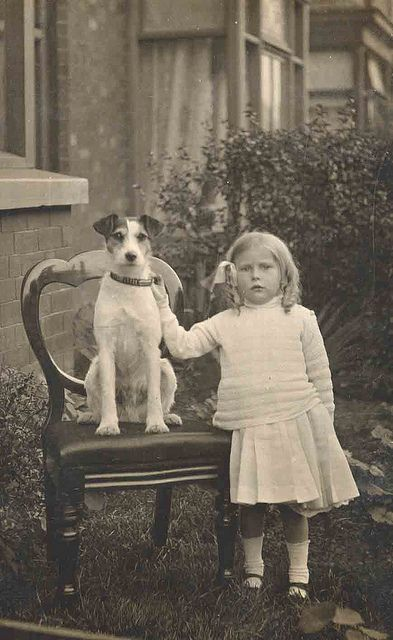 Jack Russell terrier on a chair with little girl. by Libby Hall Dog Photo