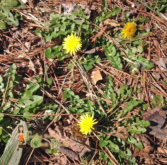 Spring Gardening Tips: Preparing Your Garden For Planting